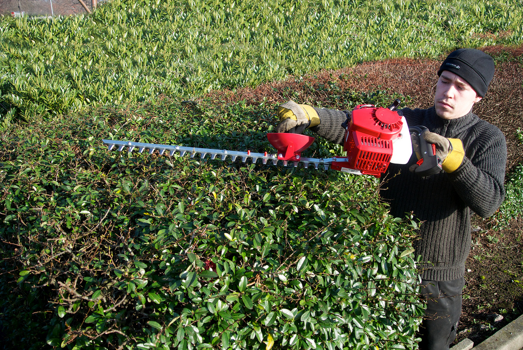 man using a gas hedge trimmer